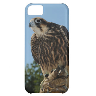 Peregrine Falcon Cover For iPhone 5C