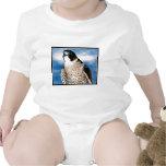 Peregrine Falcon Creeper