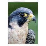Peregrine Falcon Face Photo Card
