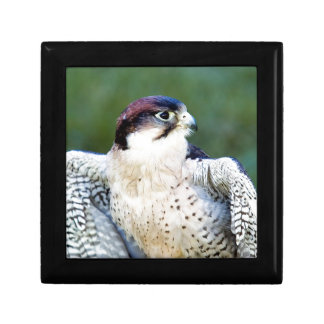 Peregrine Falcon Jewelry Boxes