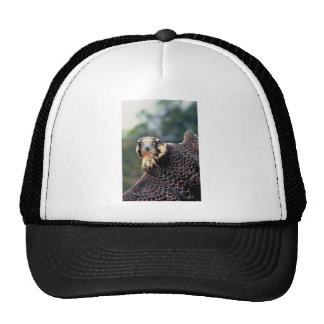 Peregrine Falcon Hats