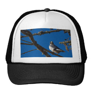 Peregrine Falcon Mesh Hats