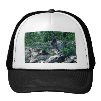 Peregrine Falcon Trucker Hats