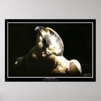 PEREGRINE FALCON I ~ Photo Print or Poster