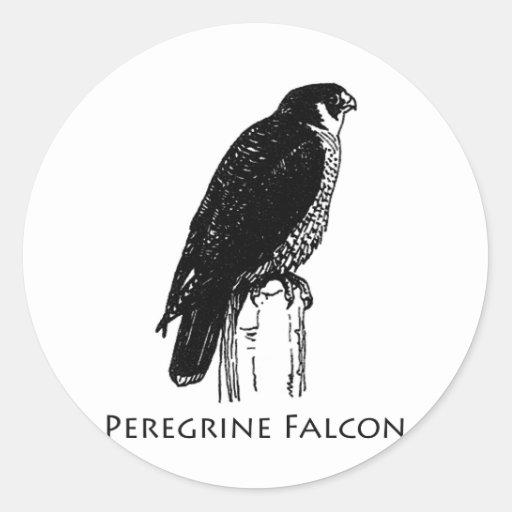 Peregrine Falcon (illustration) Stickers