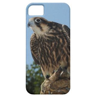 Peregrine Falcon iPhone 5 Cover