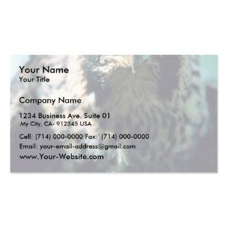 Peregrine Falcon, juvenile Business Card Templates