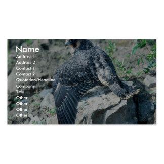 Peregrine Falcon, juvenile Business Card