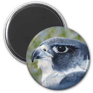 Peregrine Falcon Magnet Fridge Magnets