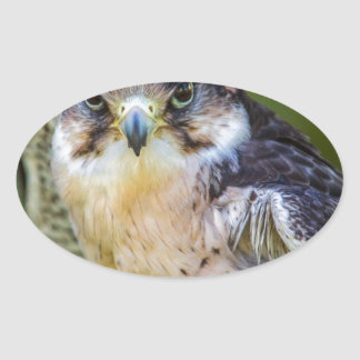Peregrine Falcon Oval Sticker