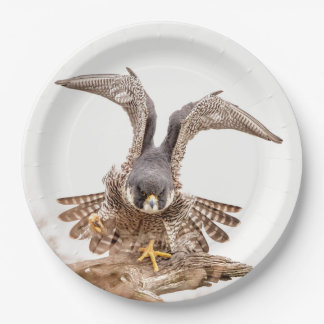 Peregrine Falcon Paper Plate