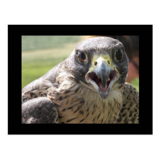PEREGRINE FALCON PAPER PRODUCTS POSTCARD