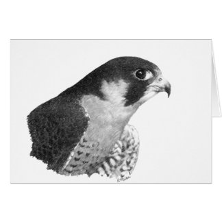 Peregrine Falcon-Pencil Cards