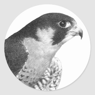 Peregrine Falcon-Pencil Classic Round Sticker