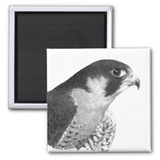 Peregrine Falcon-Pencil Fridge Magnet