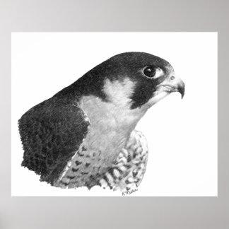 Peregrine Falcon-Pencil Poster