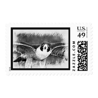 Peregrine Falcon Postage