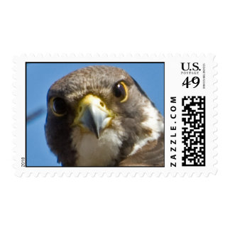 Peregrine Falcon Postage Stamp