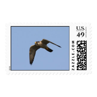 Peregrine Falcon Postage Stamps
