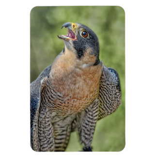 Peregrine Falcon Flexible Magnets