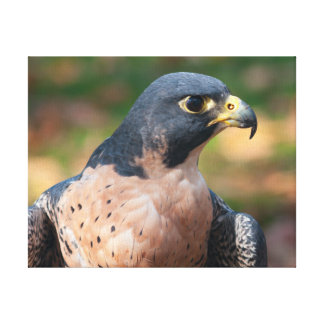 Peregrine Falcon Profile Canvas Print
