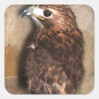 Peregrine Falcon Profile Square Sticker