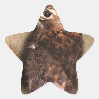 Peregrine Falcon Profile Star Sticker