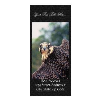 Peregrine Falcon Rack Card