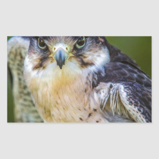 Peregrine Falcon Rectangular Sticker