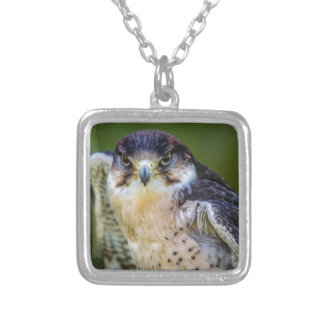 Peregrine Falcon Silver Plated Necklace