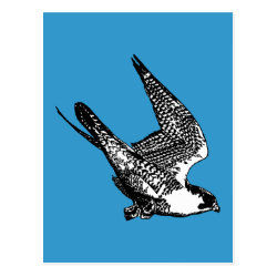 Postcard with Peregrine Falcon Sketch design