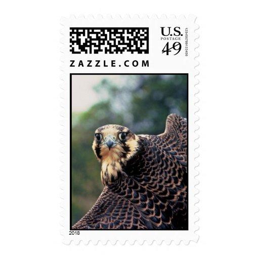Peregrine Falcon Stamps