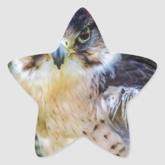 Peregrine Falcon Star Sticker