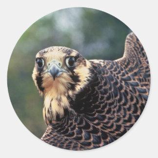 Peregrine Falcon Classic Round Sticker