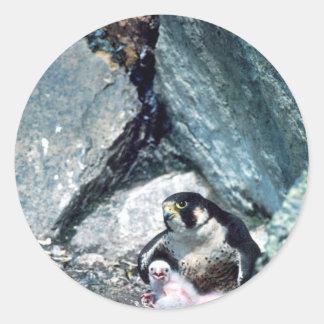 Peregrine Falcon with chicks Classic Round Sticker