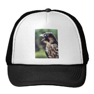 Peregrine Hats