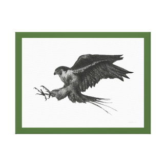 Peregrine Hawk Pen and Ink Drawing Canvas Print