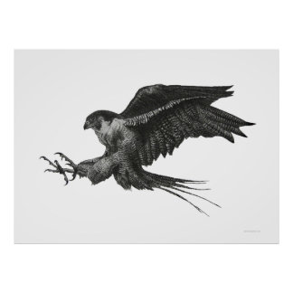Peregrine Hawk poster