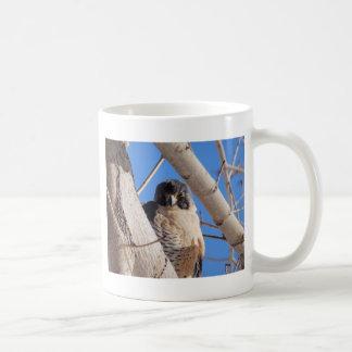 Peregrino joven taza de café
