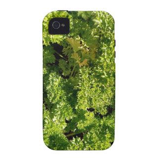 Perejil iPhone 4/4S Carcasas