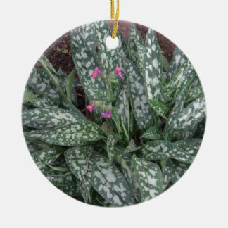 Perennial de Pulmonaria - de Lungwort Ornamentos De Reyes Magos