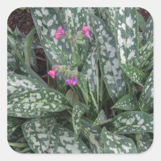 Perennial de Pulmonaria - de Lungwort Calcomanía Cuadrada Personalizada