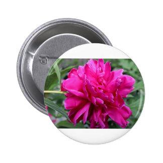 Perennial Eye Candy Pinback Button