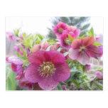 Perennial Plants - Purple Hellebore Postcard