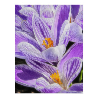 Perennial Purple Striped Crocuses Poster