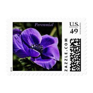 Perennial púrpura hermoso en un sello