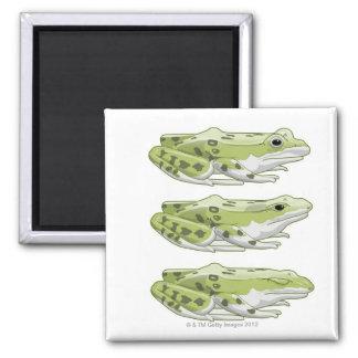 Perez Frog Magnet