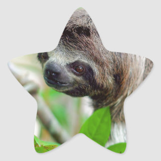 Pereza en el árbol Nicaragua Pegatina En Forma De Estrella