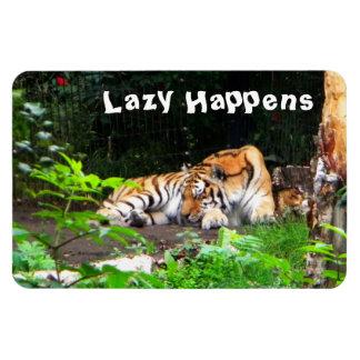 Perezoso sucede el tigre siberiano iman de vinilo