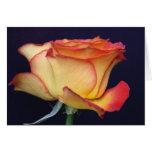 Perfección amarilla y anaranjada color de rosa felicitación